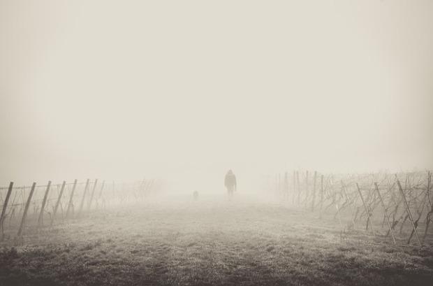 fog-1209205_640